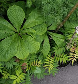 Kaip išsirinti augalą savo sklypui?