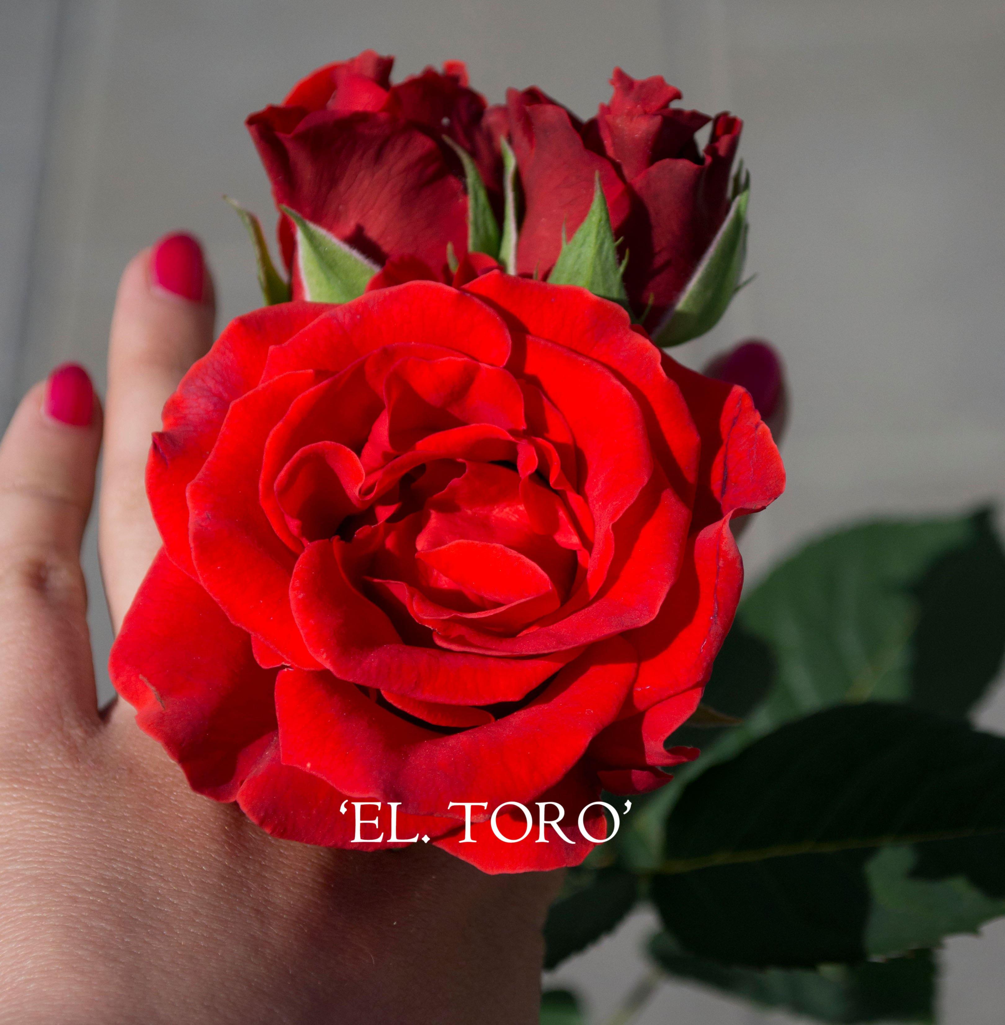 eltoro (5)-min
