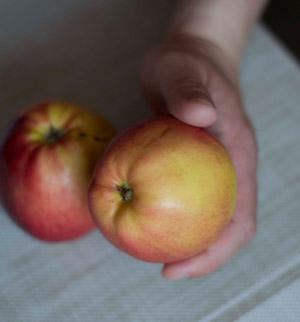 Obelų veislės, kurias rekomenduoju sodinti