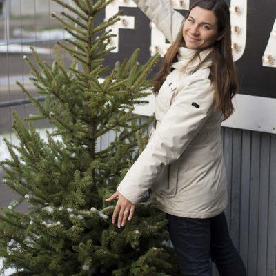 Dygioji eglė (Picea pungens) Sidabrinė didelės